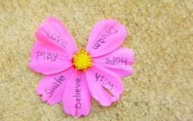 Обои цветок, надписи, настроения, лепестки, love, слова