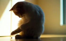Картинка тень, torode, свет, кошка