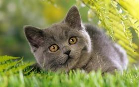 Обои трава, кошки, природа