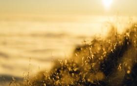 Картинка лето, трава, макро, свет, природа, туман