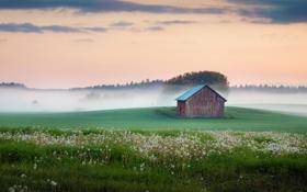 Картинка сарай, деревья, трава, туман, поле, небо, цветы