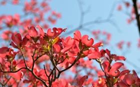 Обои небо, цветы, ветки, весна, магнолия