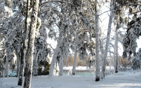 Картинка зима, снег, деревья, природа, река, фото