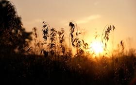 Картинка поле, трава, свет, природа