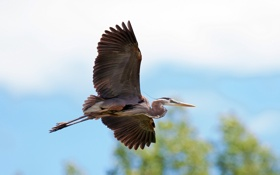 Картинка птица, полёт, небо