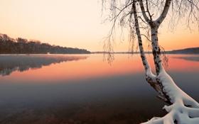 Обои зима, снег, озеро, дерево, берёза