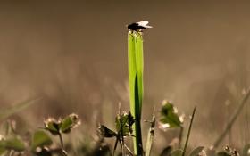Картинка трава, макро, муха