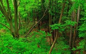 Обои листья, лес, деревья