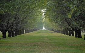 Обои зеленые, трава, аллея, листья, деревья, дорога, ветви