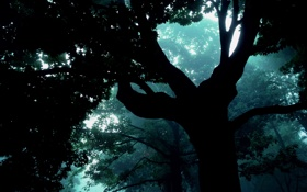 Обои лес, туман, Дерево