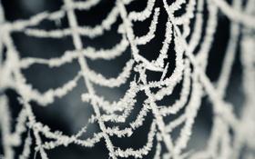 Обои холод, иней, снег, снежинки, паутина, паутинка