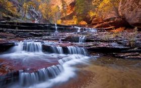 Обои лес, вода, деревья, река, течение, водопады, русло