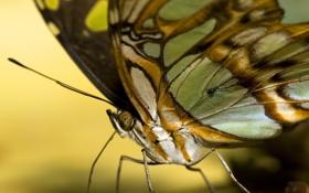 Обои цвета, бабочка, желтый фон