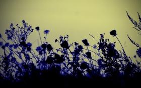 Картинка небо, трава, макро, цветы, растение, силуэт