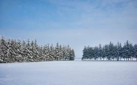 Обои зима, снег, елки