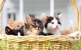 Картинка животные, корзина, котята