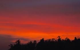 Картинка облака, деревья, зарево, лес, силуэт, небо, вечер