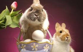 Обои тюльпан, яйцо, пасха, кролики, easter
