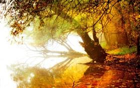 Обои осень, лес, небо, листья, вода, деревья, горы