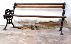 Обои скамья, взгляд, кошка