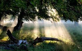 Обои лес, трава, листья, солнце, лучи, свет, пейзаж