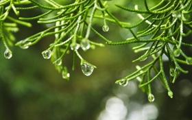 Картинка вода, капли, макро, обои, растение