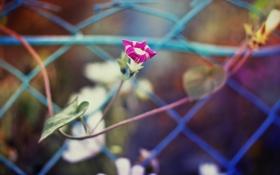 Обои осень, листья, розовые цветы