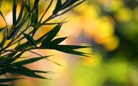Обои листья, ветки, macro, bokeh, bamboo