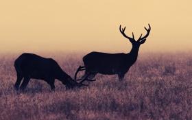 Обои иней, трава, олени