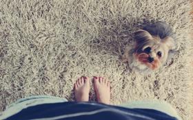 Обои фон, обои, ковер, собака, разное, девушка. ноги