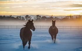 Обои поле, снег, кони, утро