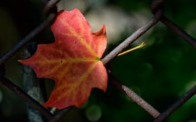 Обои осень, лист, забор