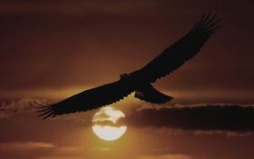 Картинка небо, солнце, облака, полет, закат, птица