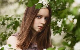 Картинка портрет, цветение, зеленоглазая, Spring breeze