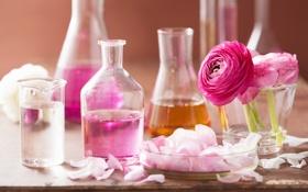 Обои цветы, розы, лепестки, натюрморт, розовые цветы, spa