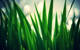 Обои листья, зеленый, размытие, трава, размытость