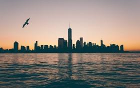 Обои отражение, Нью-Йорк, Чайка, зеркало, сумерки, Манхэттен, One World Trade Center