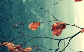 Обои макро, природа, лист, дерево, листок, ветка, macro