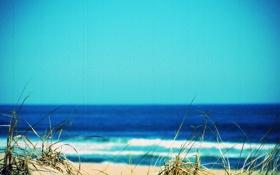 Обои трава, природа, фото, пейзажи, пляжи