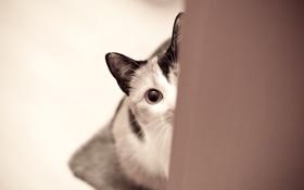 Картинка кошка, кот, глаз, смотрит