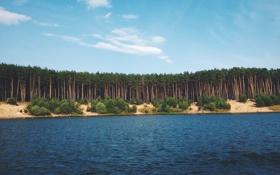 Обои озеро, Природа, сосны