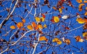 Обои небо, листья, солнечный, филиалы