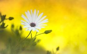 Обои белый, цветок, фон