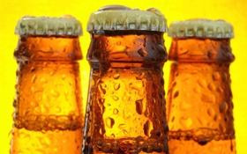 Обои капли, пиво, бутылки, крышка