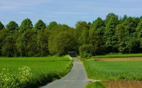 Обои лес, поле, зелень, деревья, дорога