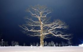 Картинка снег, ночь, дерево