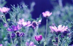 Обои лето, цветы, природа, фон, обои, лепестки, размытость