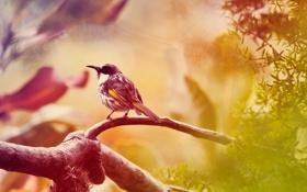 Картинка животные, птица, bird, animal