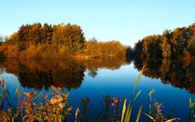Обои лес, пруд, деревья, растения, небо, осень