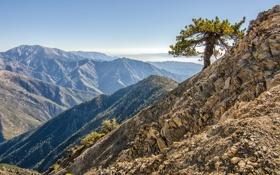 Картинка камни, дерево, Природа
